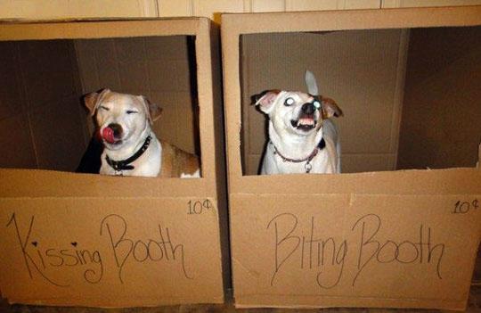 funny dog7