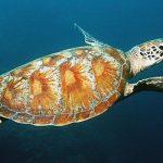 Endangered Species Quiz