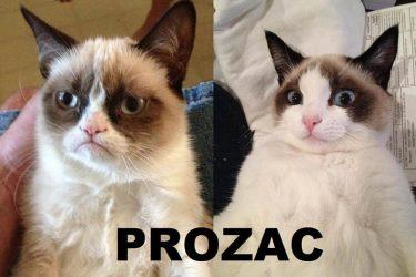 Grumpy Cat Still Grumpy!