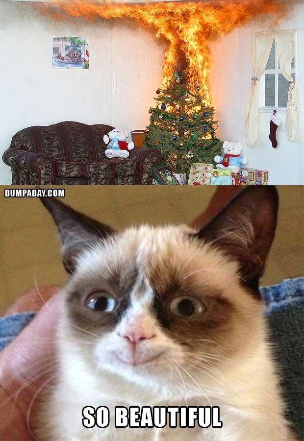 grumpy cat meme3