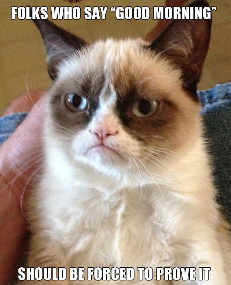 grumpy cat meme5