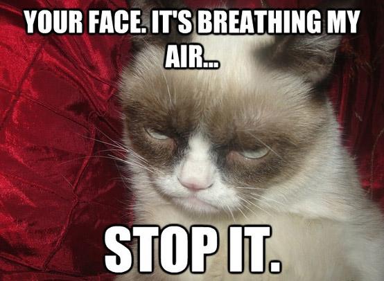 grumpy cat meme6