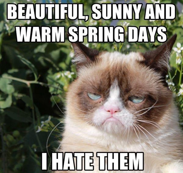 Grumpy Cat Meme7