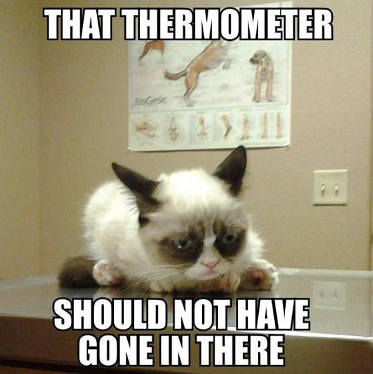 grumpy cat meme8
