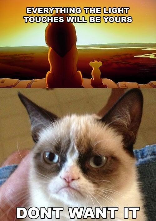 grumpy cat5