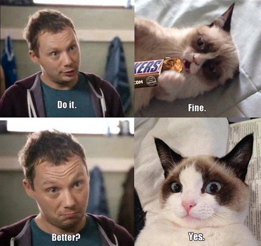 grumpy cat7