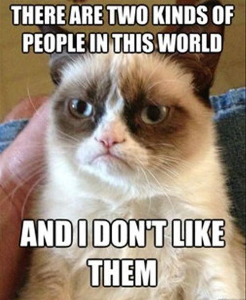 grumpy cat9