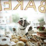 Jigsaw Puzzle: Pug Licking a Bakery window