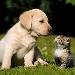 Animal Jigsaw Puzzles: Cute Puppy & Kitten