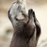 Animal Jigsaw Puzzles: Funny Sea Otter
