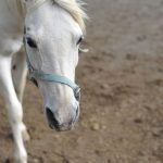 Animal Jigsaw Puzzles: White Horse