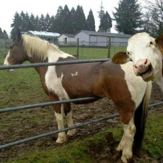 Animal photobomb11