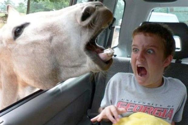 Animal photobomb7