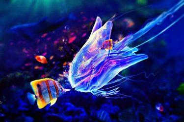 Animal Jigsaw Puzzles: Jellyfish
