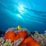 Jigsaw Puzzle: Anemone Fish