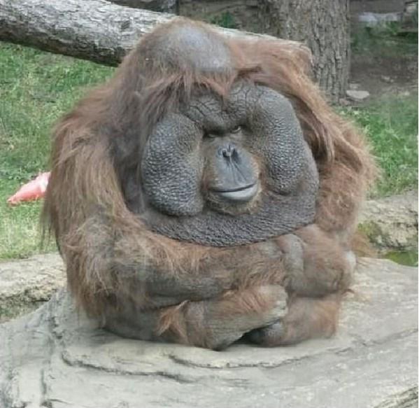 funny monkey10