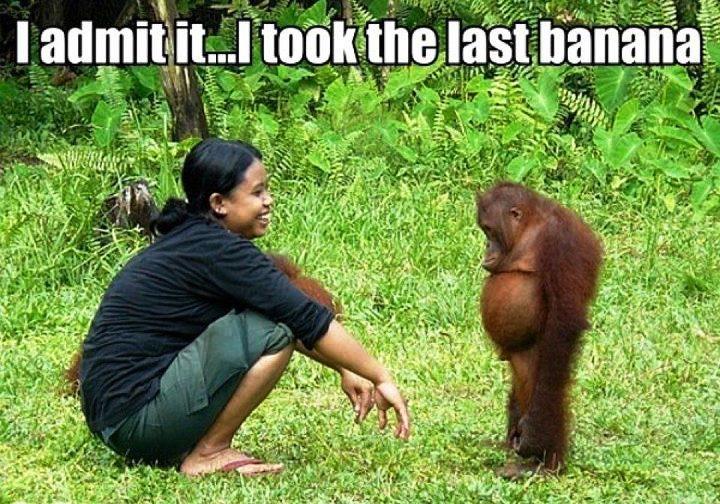funny monkey12