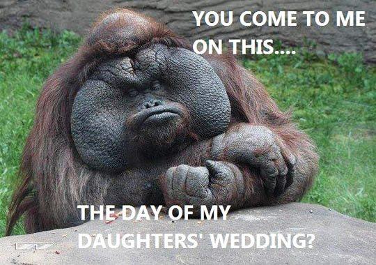 funny monkey13