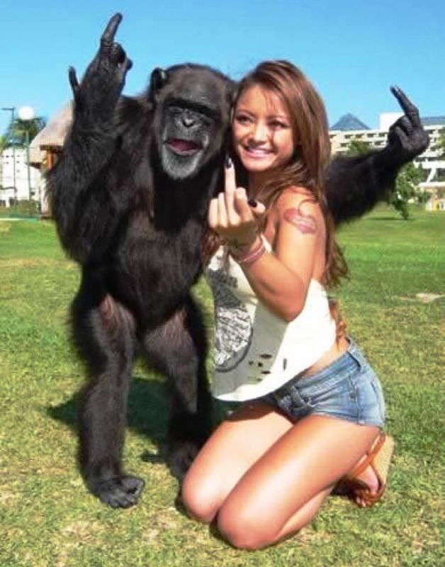 funny monkey16