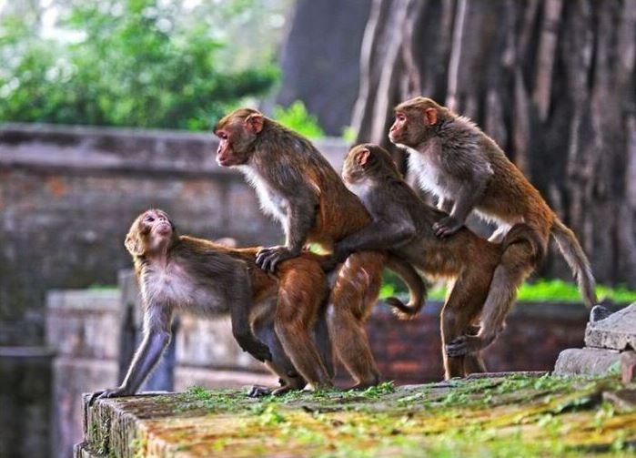 funny monkey18