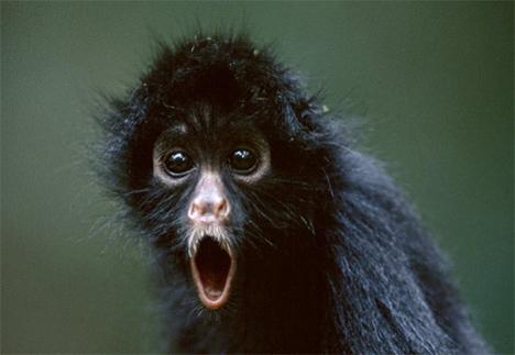 funny monkey19