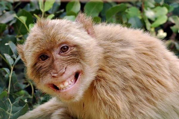 funny monkey20