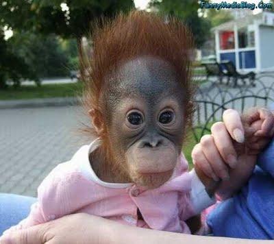 funny monkey5