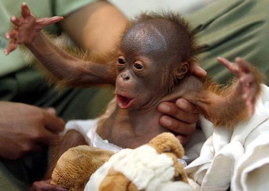 funny monkey8