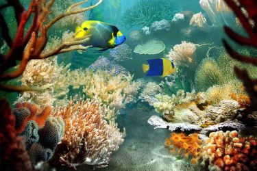 Animal Jigsaw Puzzles: Tropical Fish & Coral