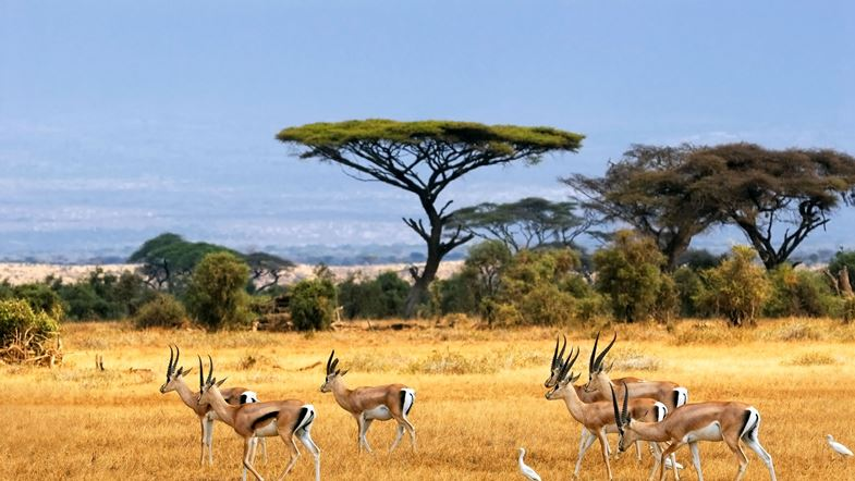 Amazing pictures africa gazelle