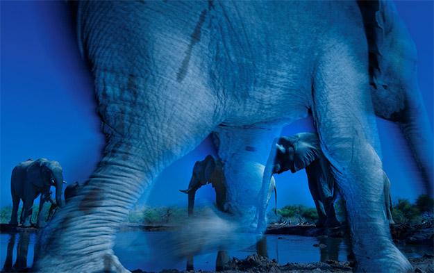 Animal Planet Wildlife Photographer Of The Year 2013 elephants