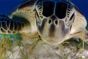 Animal Planet Wildlife Photographer Of The Year 2013