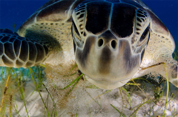 Animal Planet Wildlife Photographer Of The Year 2013 sea-turtle