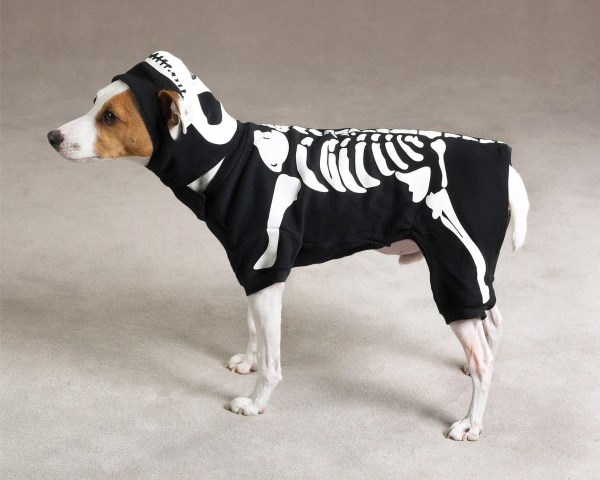 Casual Canine Cotton Glow bones Dog Costume