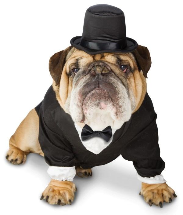 Dapper Dog Tuxedo Pet Costume