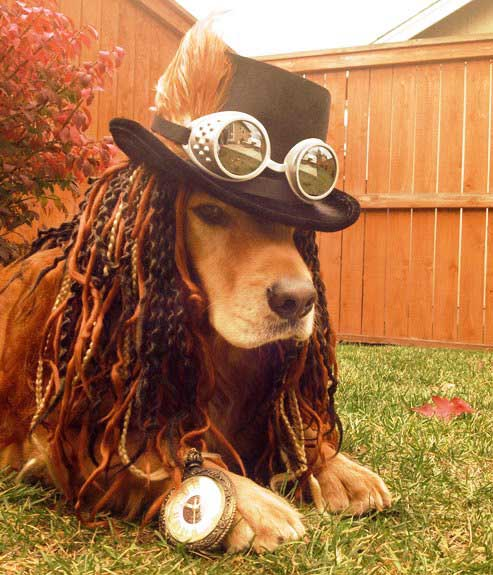 Dogs in costume_4 non blondes