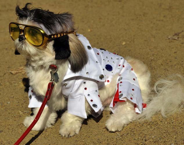 Dogs in costume_Elvis