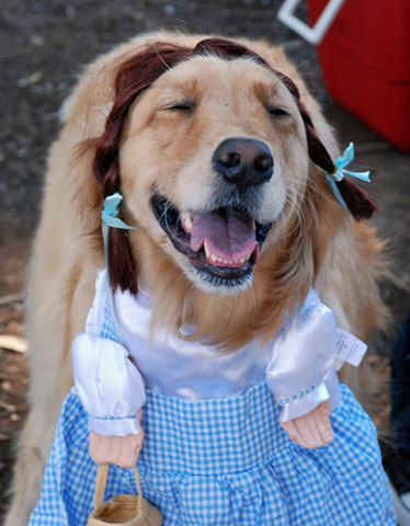 Dogs in costume_Jill
