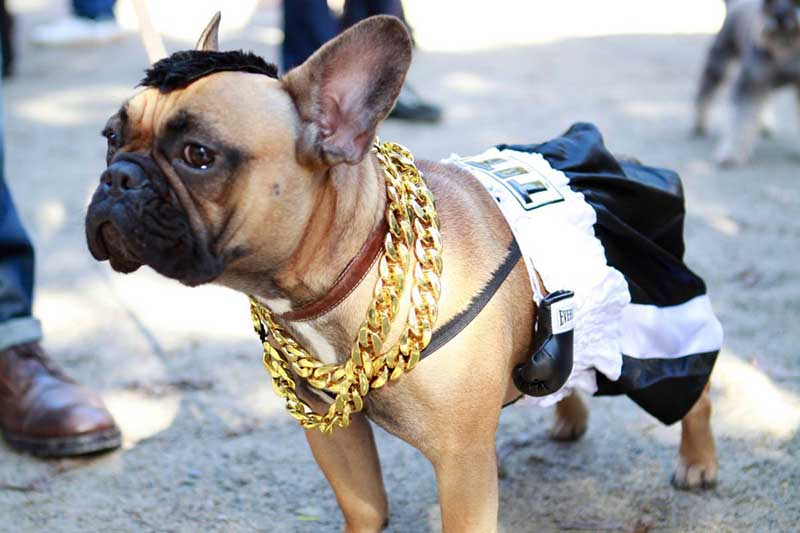 Dogs in costume_Mr.T