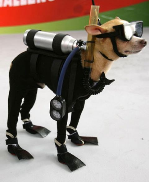 Dogs in costume_Scuba diver