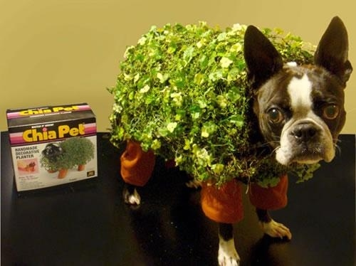 Dogs in costume_Chia Pet