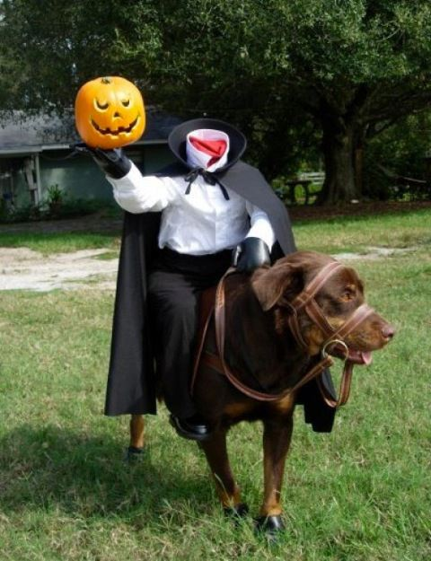 Dogs in costume_horse