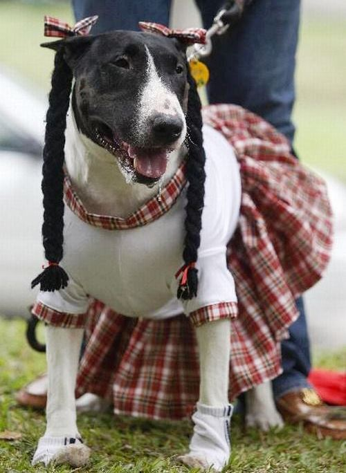 Dogs in costume_girl scout