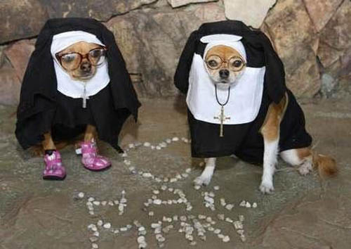 Dogs in costume_nuns