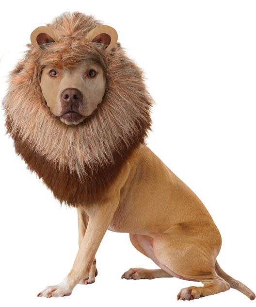 dog halloween costume priest lion dog costume