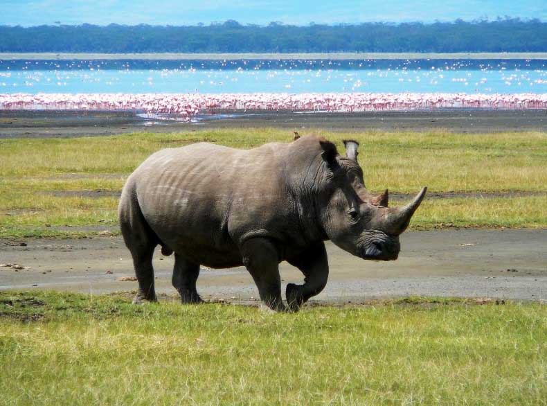 amazing pictures africa Rhino