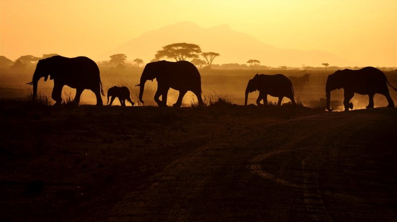 amazing pictures africa elephants sunset