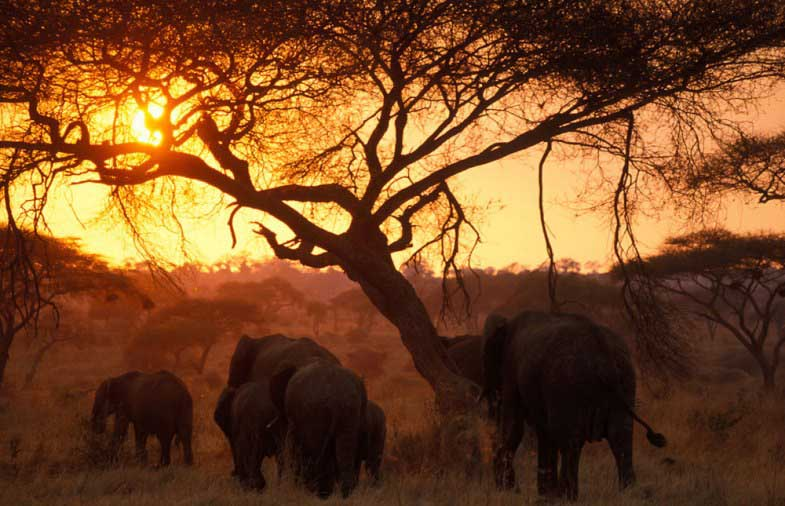 amazing pictures africa elephants