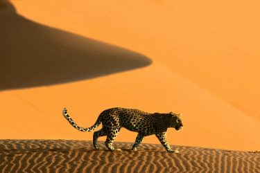 20 Amazing Pictures of Africa
