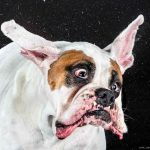 Dogs Shaking Water by Carli Davidson